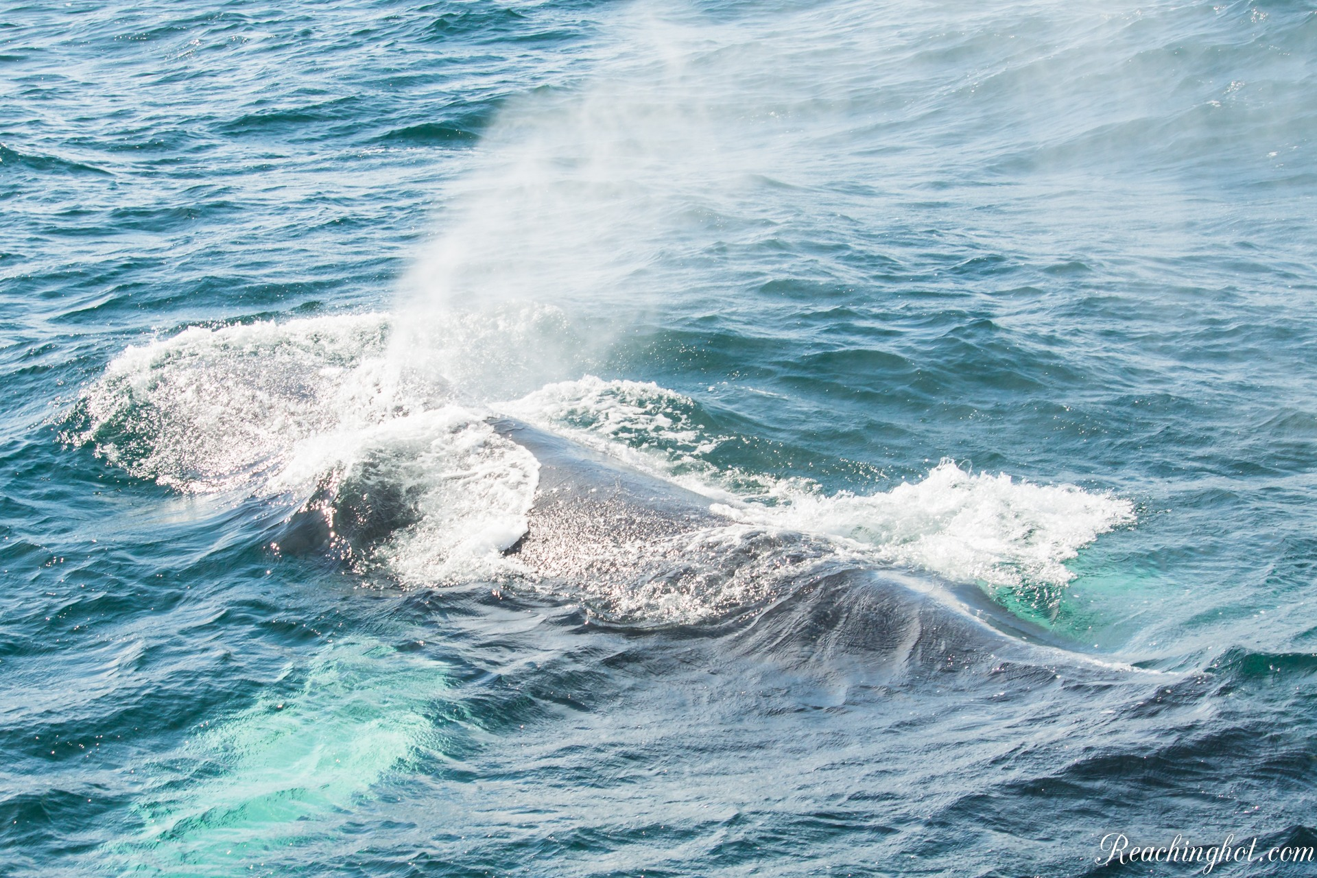 Reachinghot travelblogger at whale watching tour in Samaná in Dominican Republic
