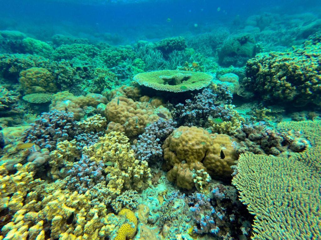 Lusong Coral Garden, Coron, Philippines